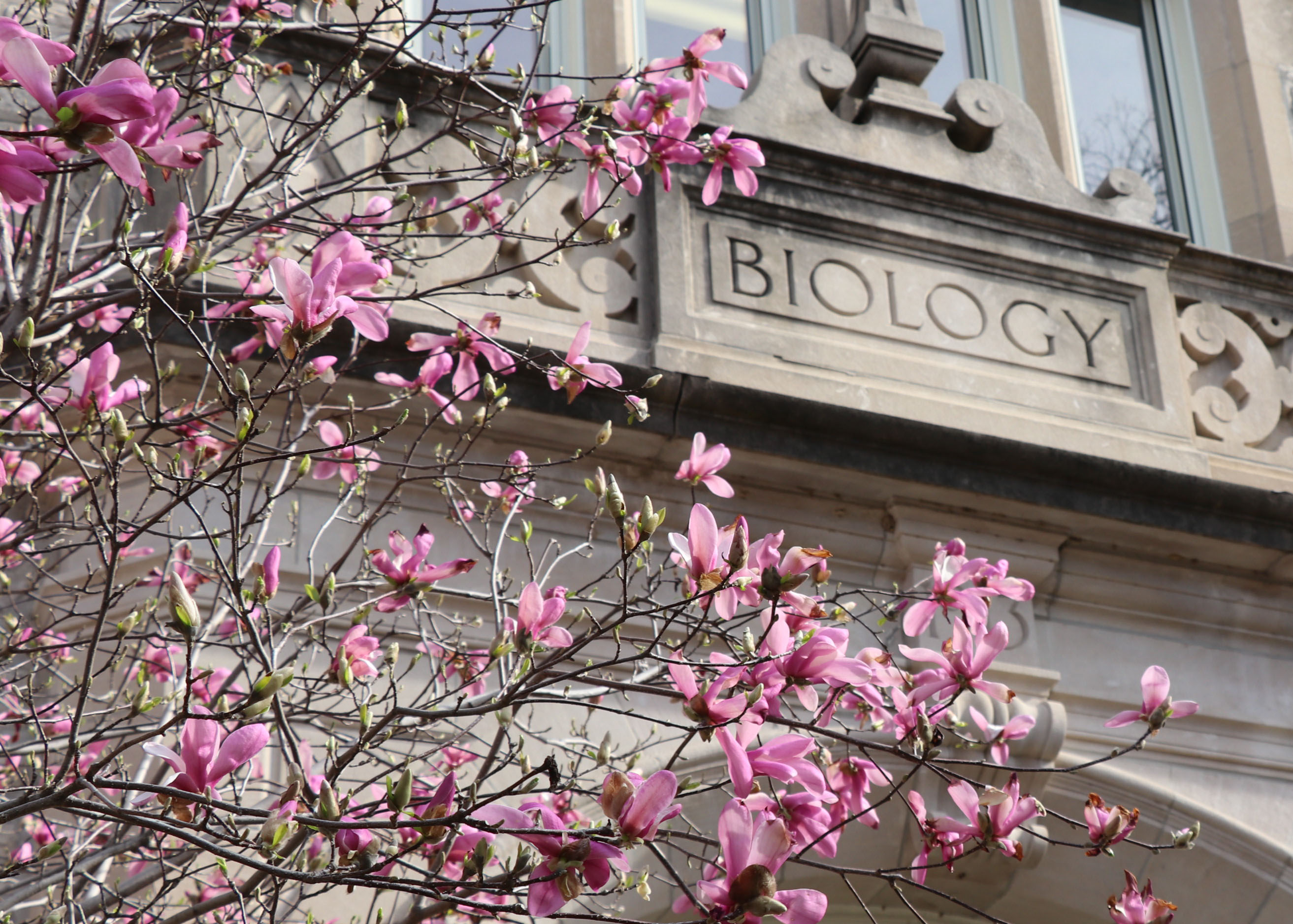 Biology Building with blooms