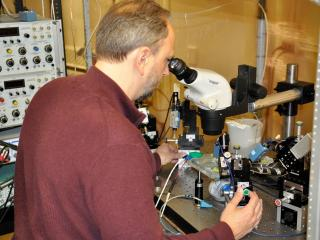 "David Schulz examines neurons under a microscope David Schulz, a professor of biological sciences in the MU College of Arts and Science, and a team of scientists at the University of Missouri have discovered that a neuron's own electrical signal, or voltage, can indicate whether the neuron is functioning normally. If that voltage is absent, scientists say everything is ""out of whack."""